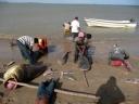 Hombres wayúu destripando tiburones en Bahía Hondita