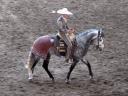 Jinete en un caballo hermoso